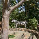 Crazy Golf Zebra